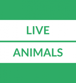 Live Animal Loans