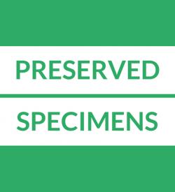 Preserved Specimen Loans