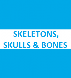 Skeletons, Skulls and Bones