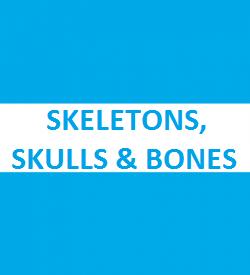 Skeletons, Skulls and Bones