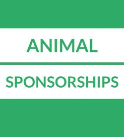 Animal Sponsorships